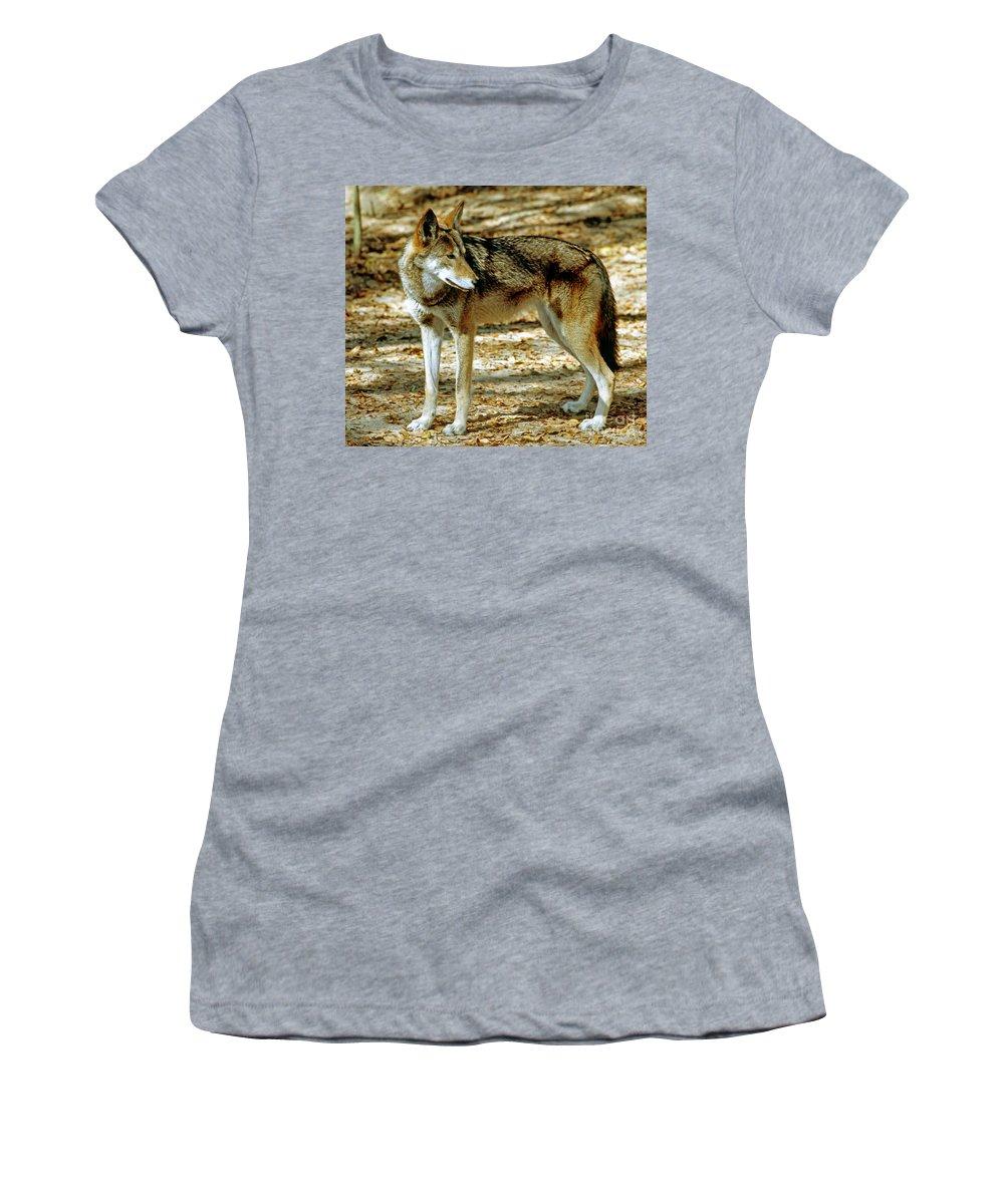 Animal Women's T-Shirt featuring the photograph Red Wolf by Millard H. Sharp
