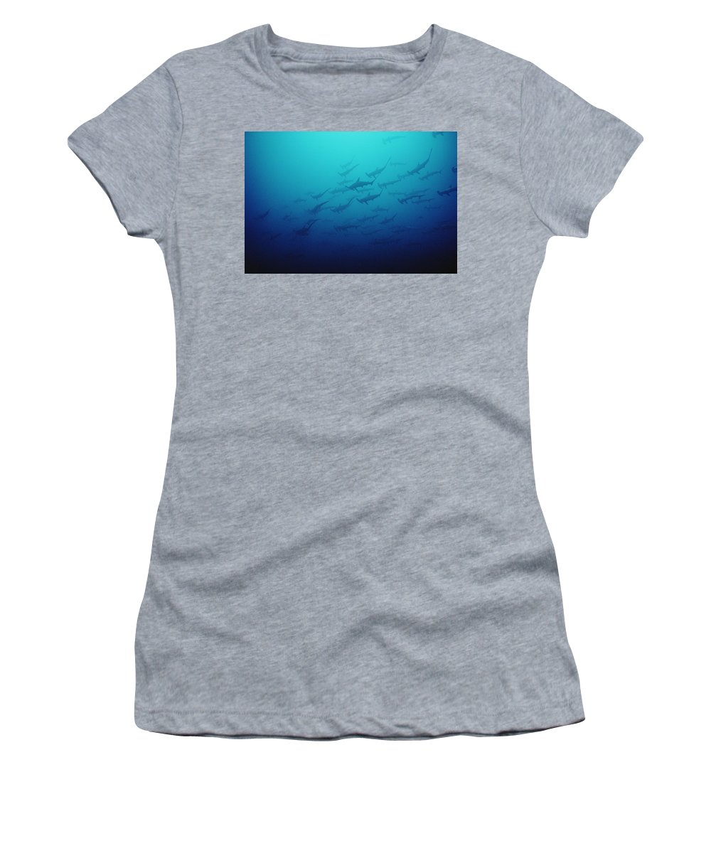 Feb0514 Women's T-Shirt (Athletic Fit) featuring the photograph Scalloped Hammerhead Shark School Cocos by Flip Nicklin