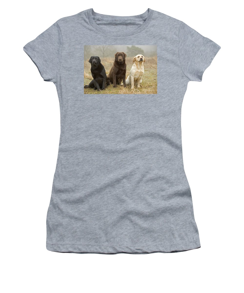 Labrador Retriever Women's T-Shirt (Athletic Fit) featuring the photograph Three Kinds Of Labradors by Jean-Michel Labat