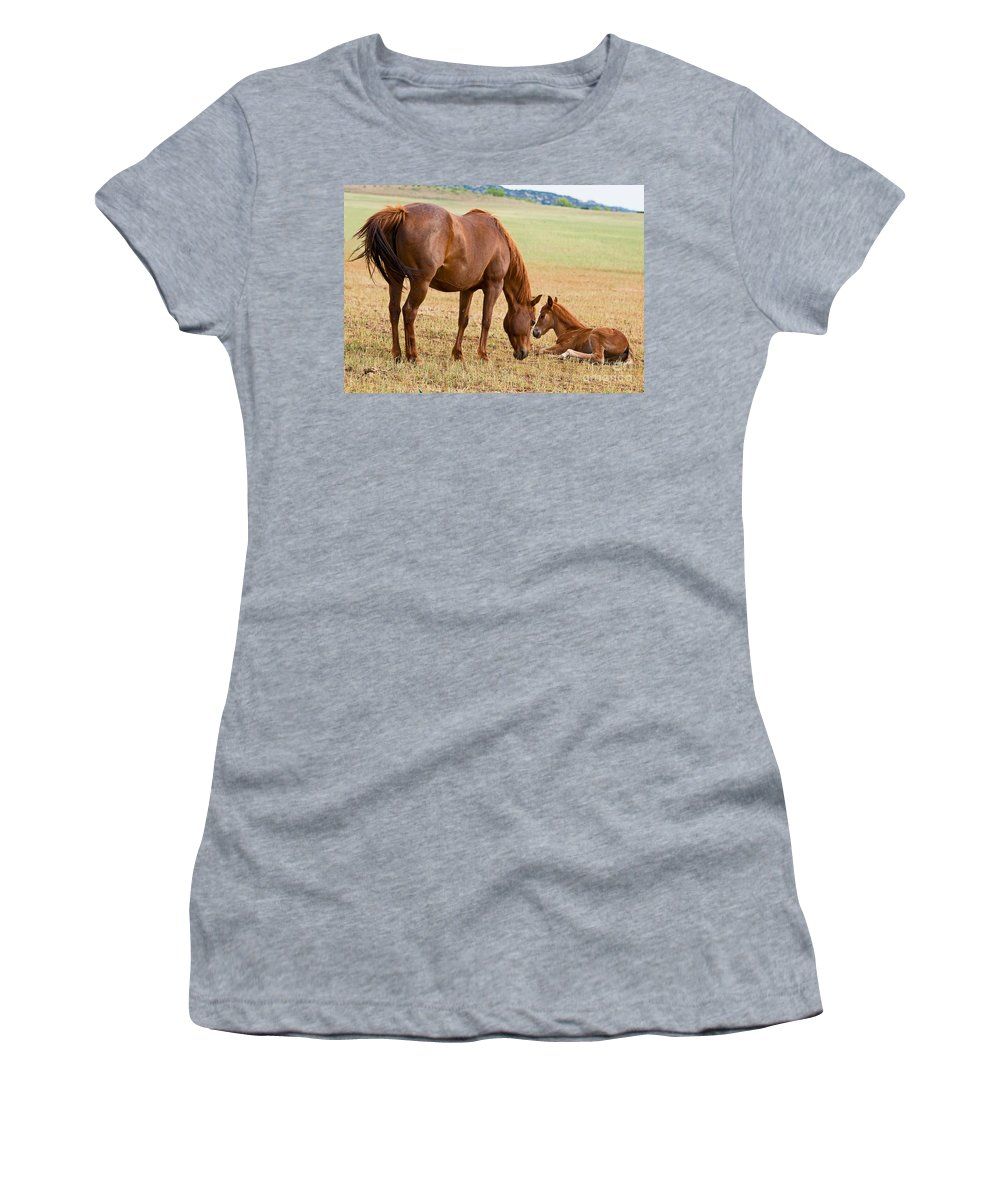 Nature Women's T-Shirt featuring the photograph Wild Horse Mother And Foal by Millard H. Sharp