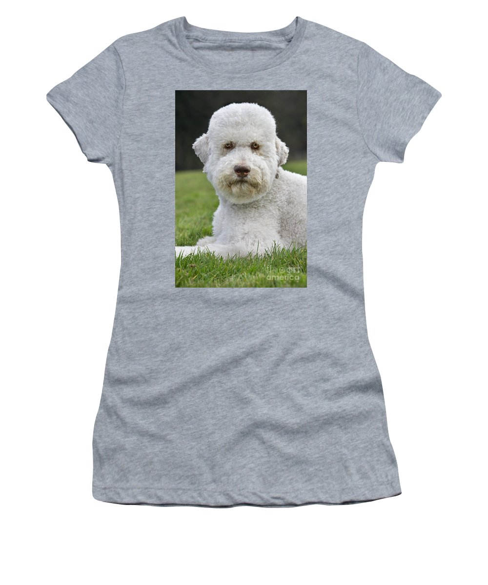 Standard Poodle Women's T-Shirt featuring the photograph 110506p126 by Arterra Picture Library