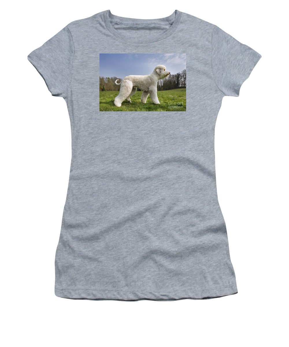 Standard Poodle Women's T-Shirt featuring the photograph 110506p134 by Arterra Picture Library