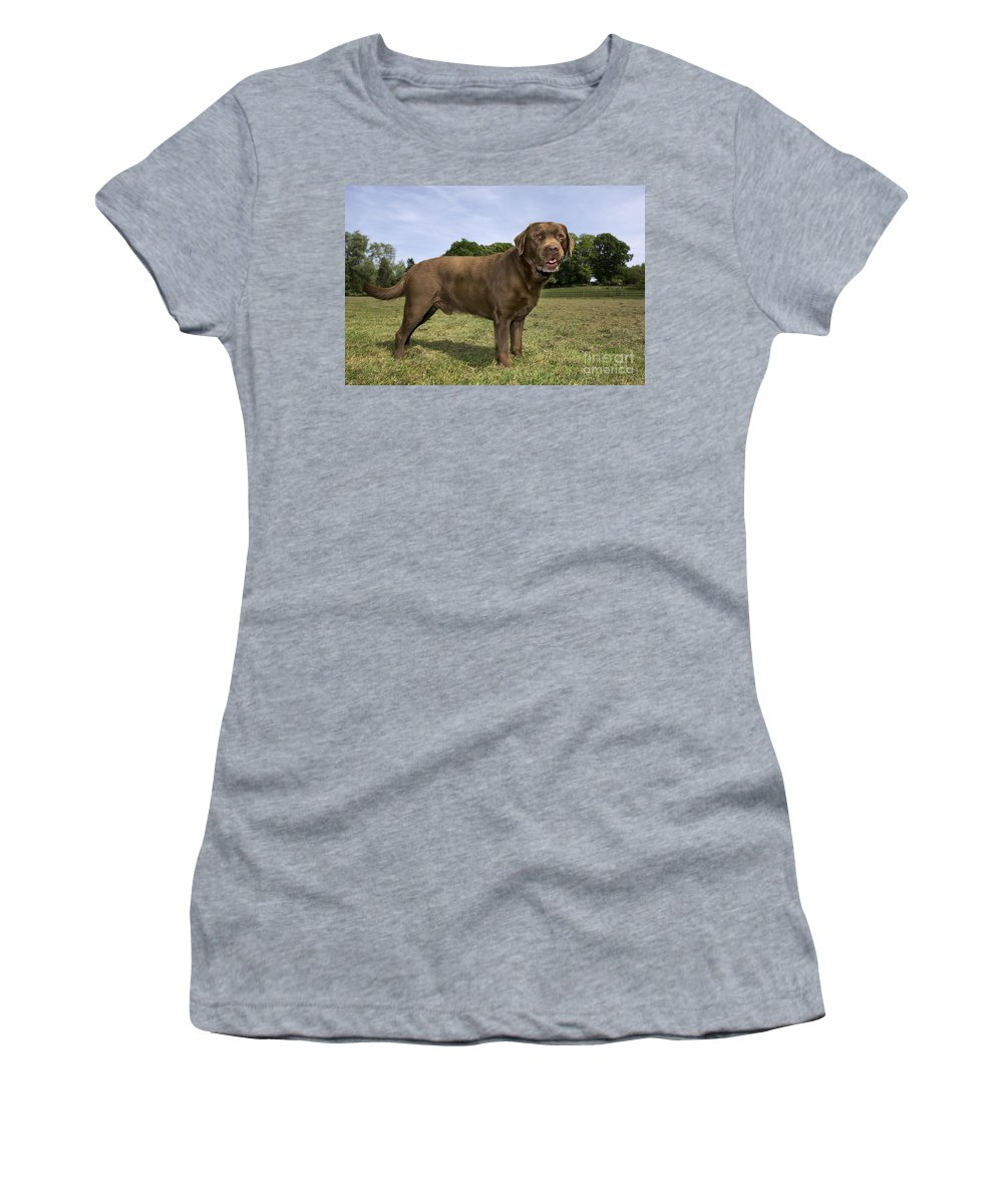 Mammal Women's T-Shirt featuring the photograph 110506p186 by Arterra Picture Library