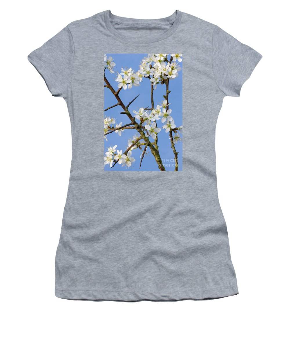 Blackthorn Women's T-Shirt featuring the photograph 110506p221 by Arterra Picture Library