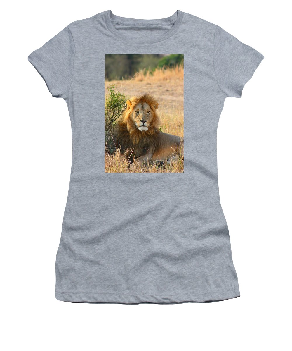 Lion Women's T-Shirt featuring the photograph Lion by Amanda Stadther