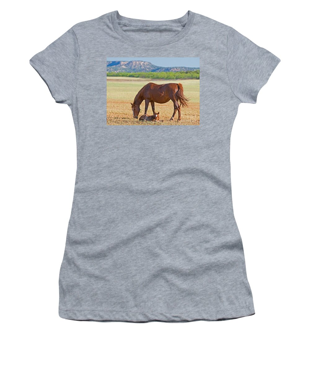 Nature Women's T-Shirt featuring the photograph Wild Horses Mother And Foal by Millard H. Sharp