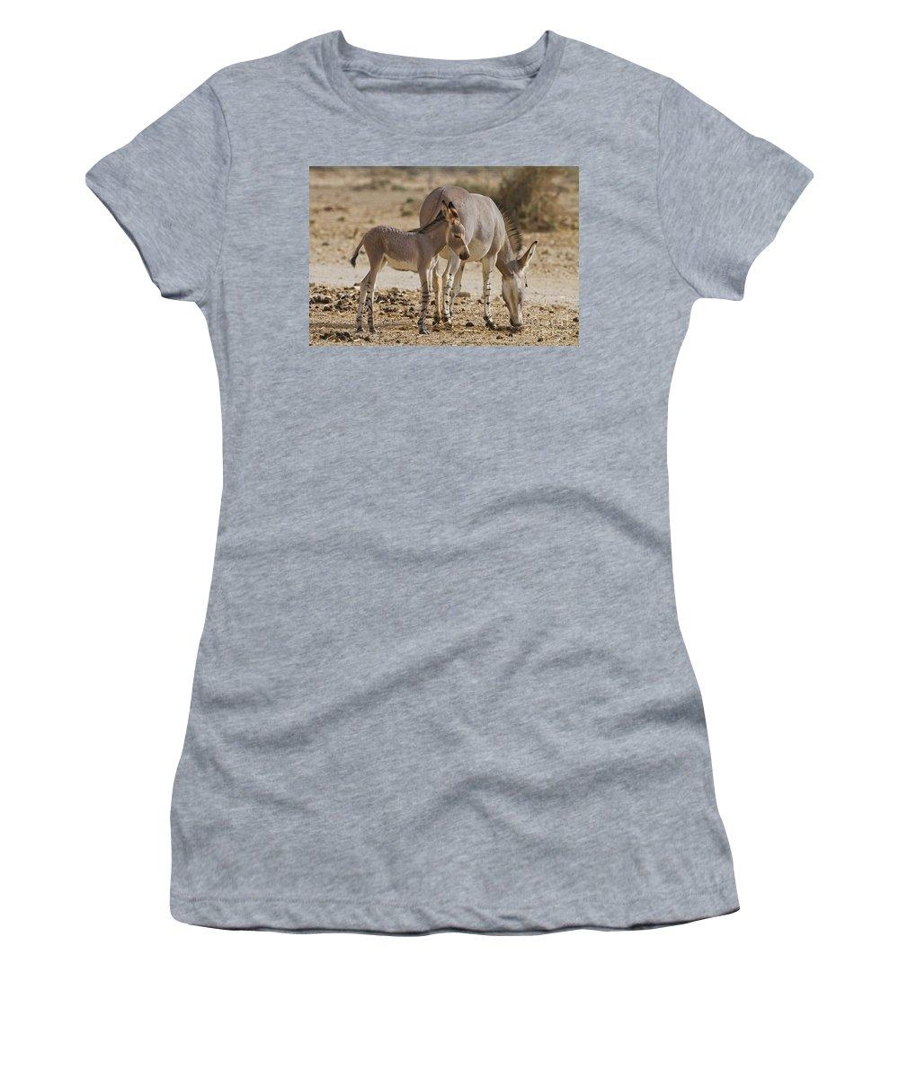 African Wild Ass Women's T-Shirt featuring the photograph African Wild Ass Equus Africanus by Eyal Bartov