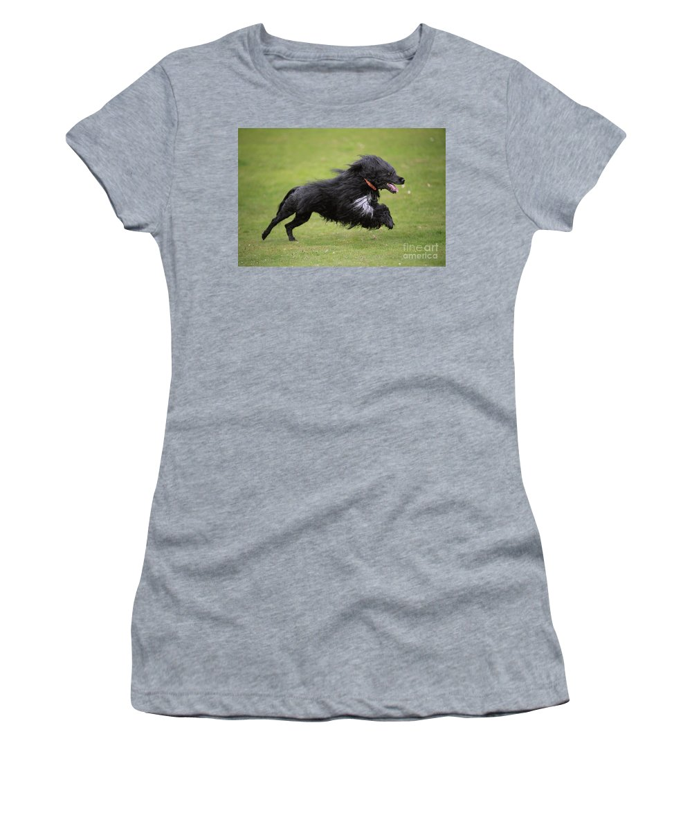 Portuguese Water Dog Women's T-Shirt (Athletic Fit) featuring the photograph Portuguese Water Dog by John Daniels