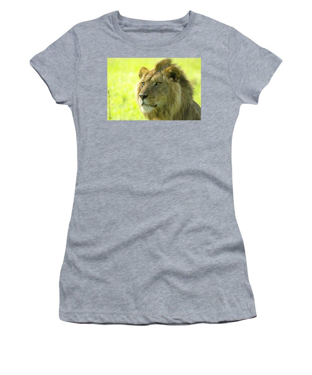 Lion Women's T-Shirt featuring the photograph Golden Boy by Michele Burgess