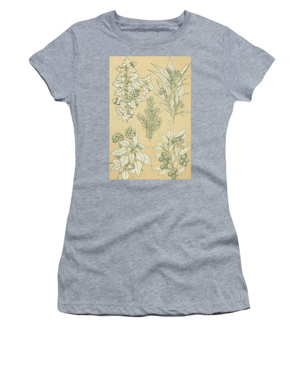 Ornament; Ornamentation; Design; Pattern; Historical; Plates; Leaves; Nature; Botany; Botanical; Leaf; Natural Women's T-Shirt (Athletic Fit) featuring the painting Leaves From Nature by English School