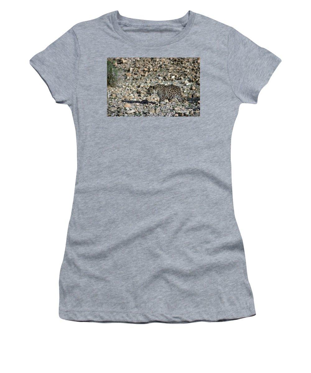 Leopard Women's T-Shirt featuring the photograph Arabian Leopard Panthera Pardus by Eyal Bartov
