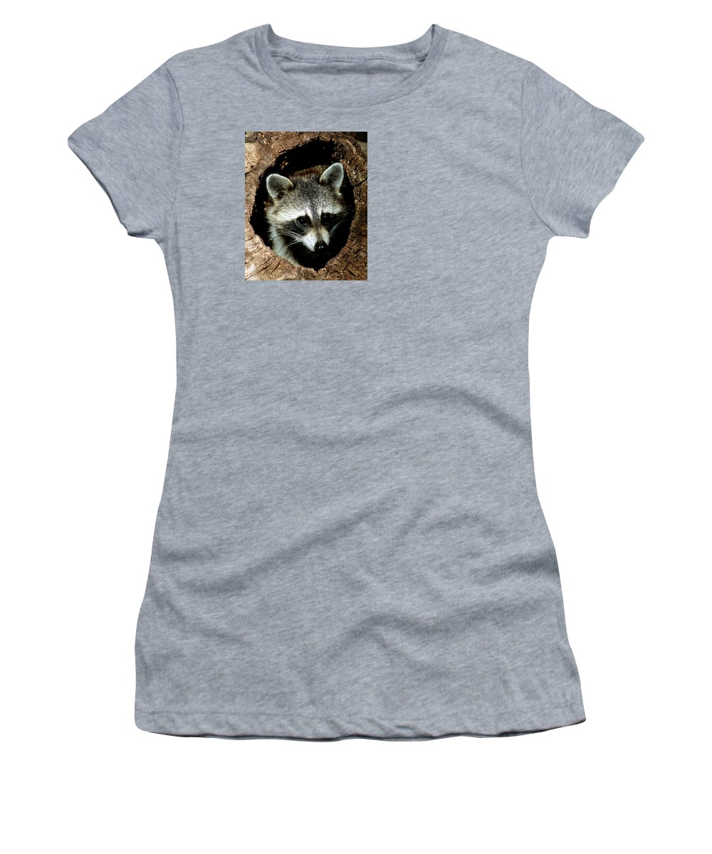 Raccoon (procyon Lotor) Women's T-Shirt featuring the photograph Raccoon by Millard H Sharp