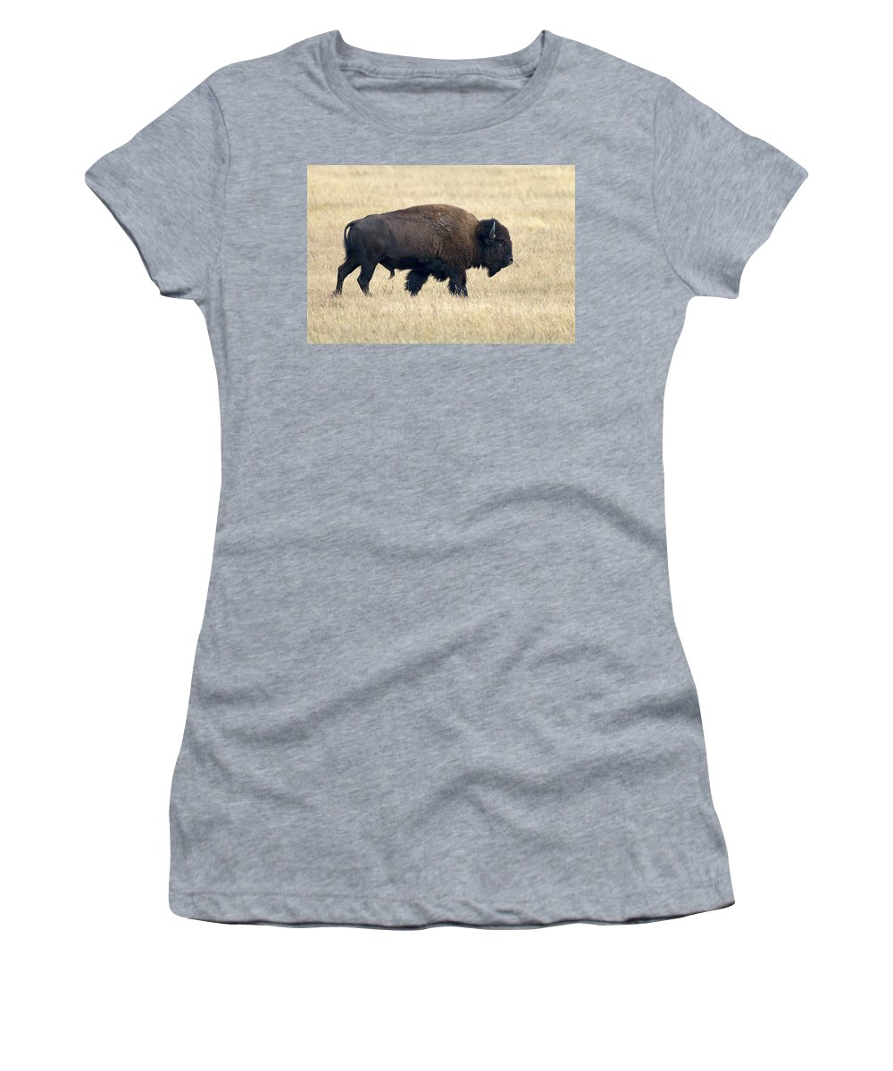 Feb0514 Women's T-Shirt (Athletic Fit) featuring the photograph American Bison Bull Grand Teton Np by Ingo Arndt