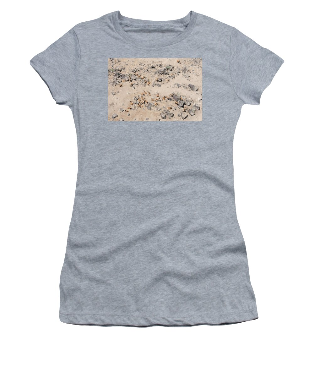 John A. Ferrante Women's T-Shirt featuring the photograph Animal Aerial by John Ferrante