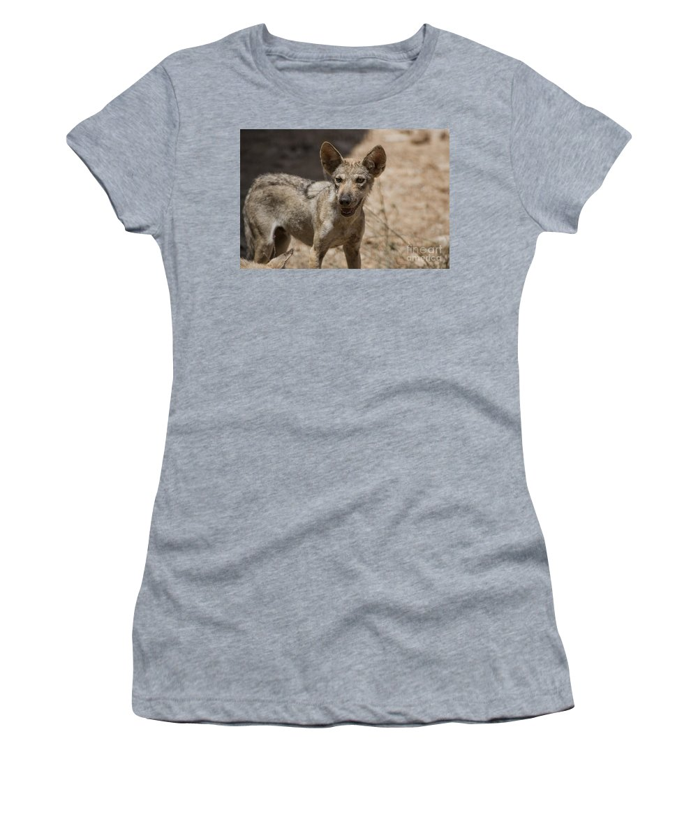 Desert Women's T-Shirt featuring the photograph Arabian Wolf Canis Lupus Arabs by Eyal Bartov