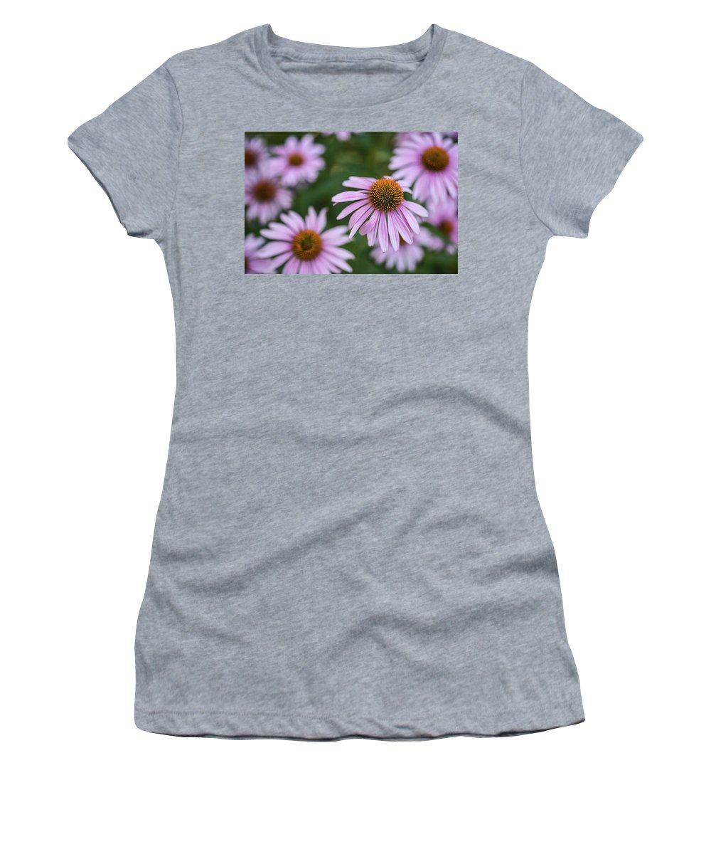 Cone Flower Women's T-Shirt featuring the photograph Beautiful Cone Flowers Closeup by Vishwanath Bhat