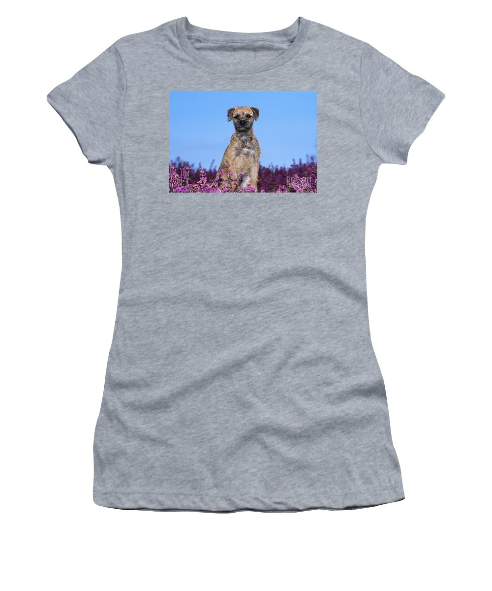 Border Terrier Women's T-Shirt (Athletic Fit) featuring the photograph Border Terrier Dog, In Heather by John Daniels