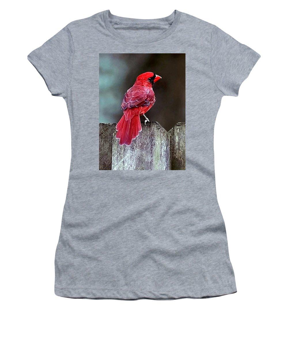 Bird Women's T-Shirt featuring the photograph Cardinal by Randy Matthews