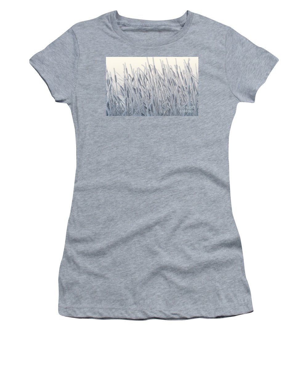Flora Women's T-Shirt featuring the photograph Cattails Typha Latifolia Covered In Snow by Ron Sanford
