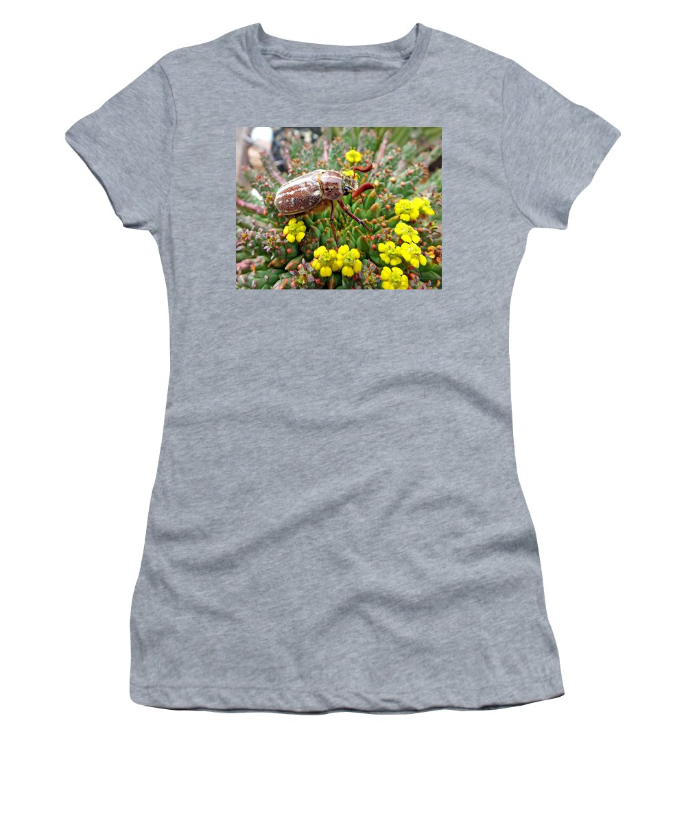 Duane Mccullough Women's T-Shirt featuring the photograph Chafer Beetle On Medusa Succulent by Duane McCullough