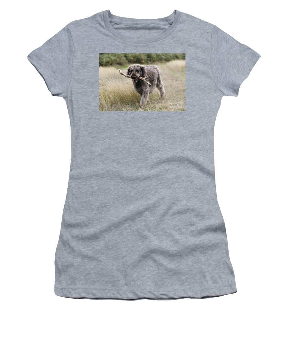 Labradoodle Women's T-Shirt (Athletic Fit) featuring the photograph Chocolate Labradoodle by John Daniels