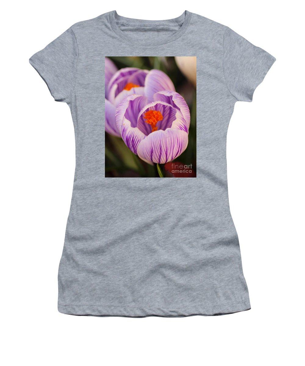 Crocus Women's T-Shirt featuring the photograph Closeup Striped Purple Crocus Vernus by Kerstin Ivarsson