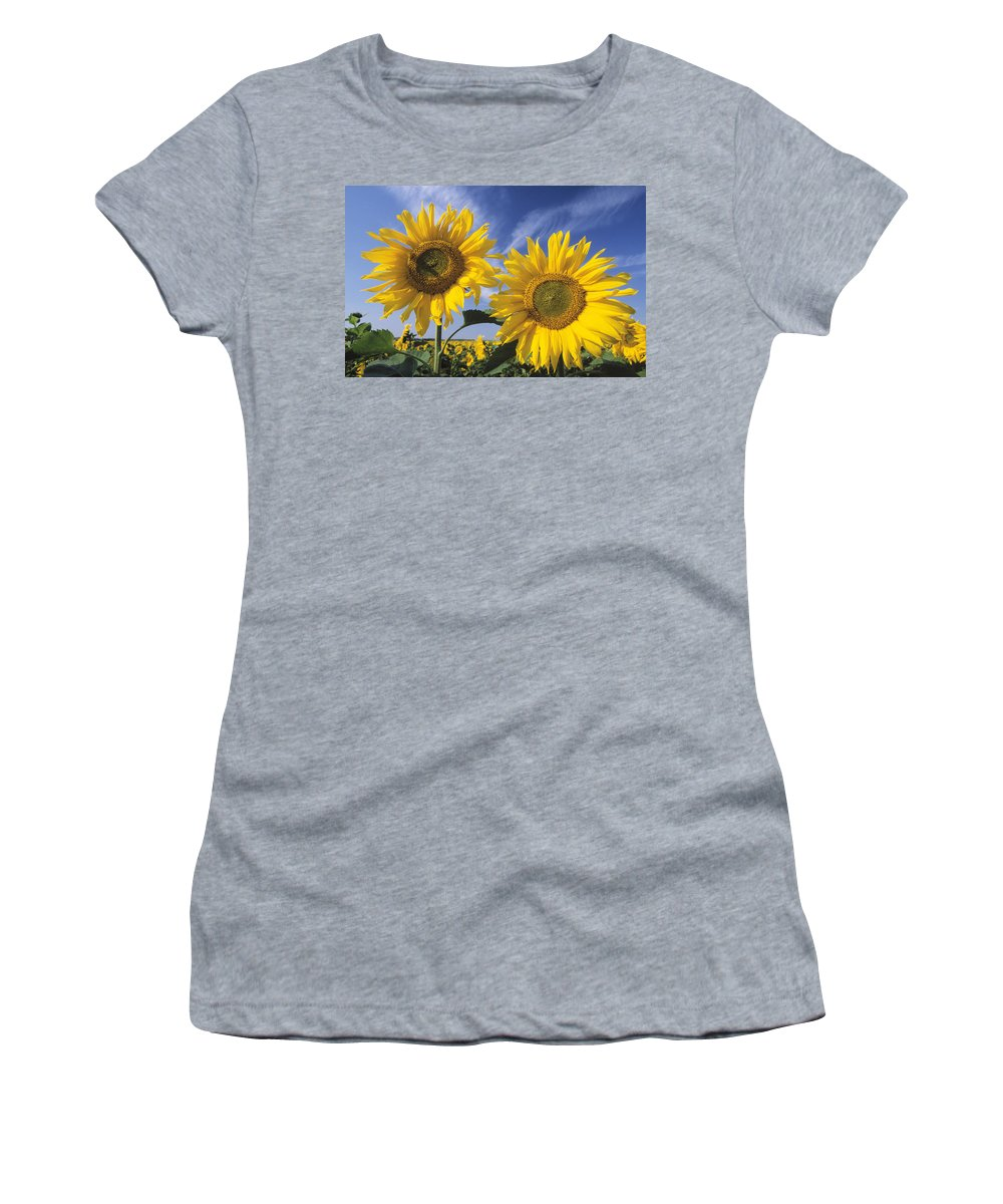 Feb0514 Women's T-Shirt (Athletic Fit) featuring the photograph Common Sunflower Field by Ingo Arndt