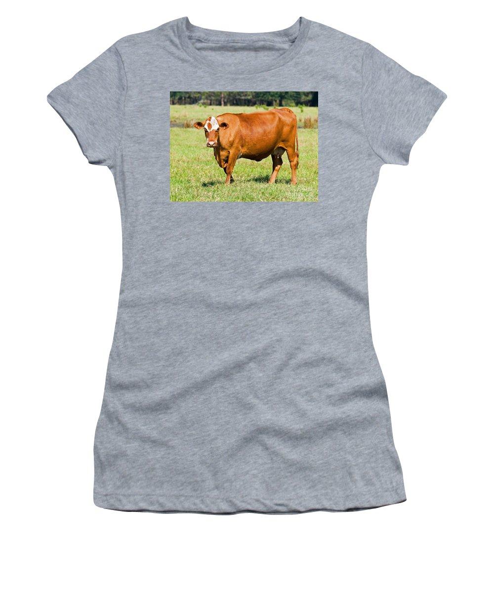 Animal Women's T-Shirt featuring the photograph Dairy Cow by Millard H. Sharp
