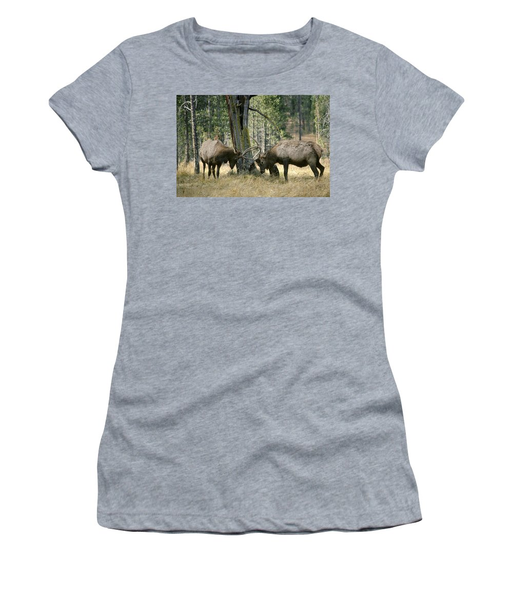 Feb0514 Women's T-Shirt (Athletic Fit) featuring the photograph Elks Sparring Yellowstone Np Wyoming by Michael Quinton