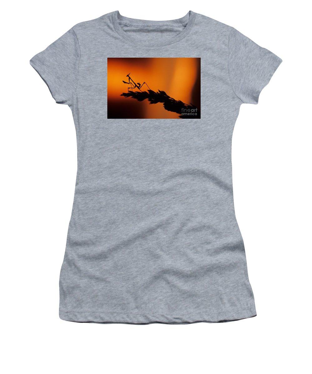 European Devil Mantis Women's T-Shirt (Athletic Fit) featuring the photograph European Devil Mantis by Francesco Tomasinelli