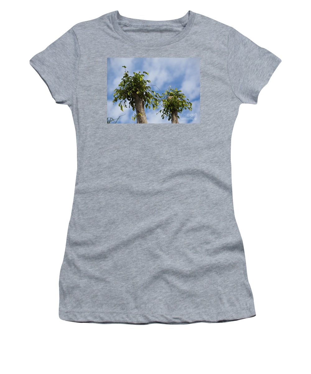 Ficus Tree Leaves Growing In Sky Benjamina Weeping Fig Benjamin Women's T-Shirt featuring the photograph Ficus Leaves Against The Sky by Allan Hughes
