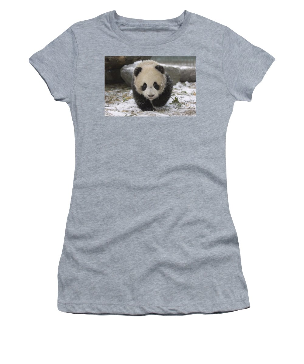 Feb0514 Women's T-Shirt (Athletic Fit) featuring the photograph Giant Panda Cub Approaching Wolong China by Katherine Feng