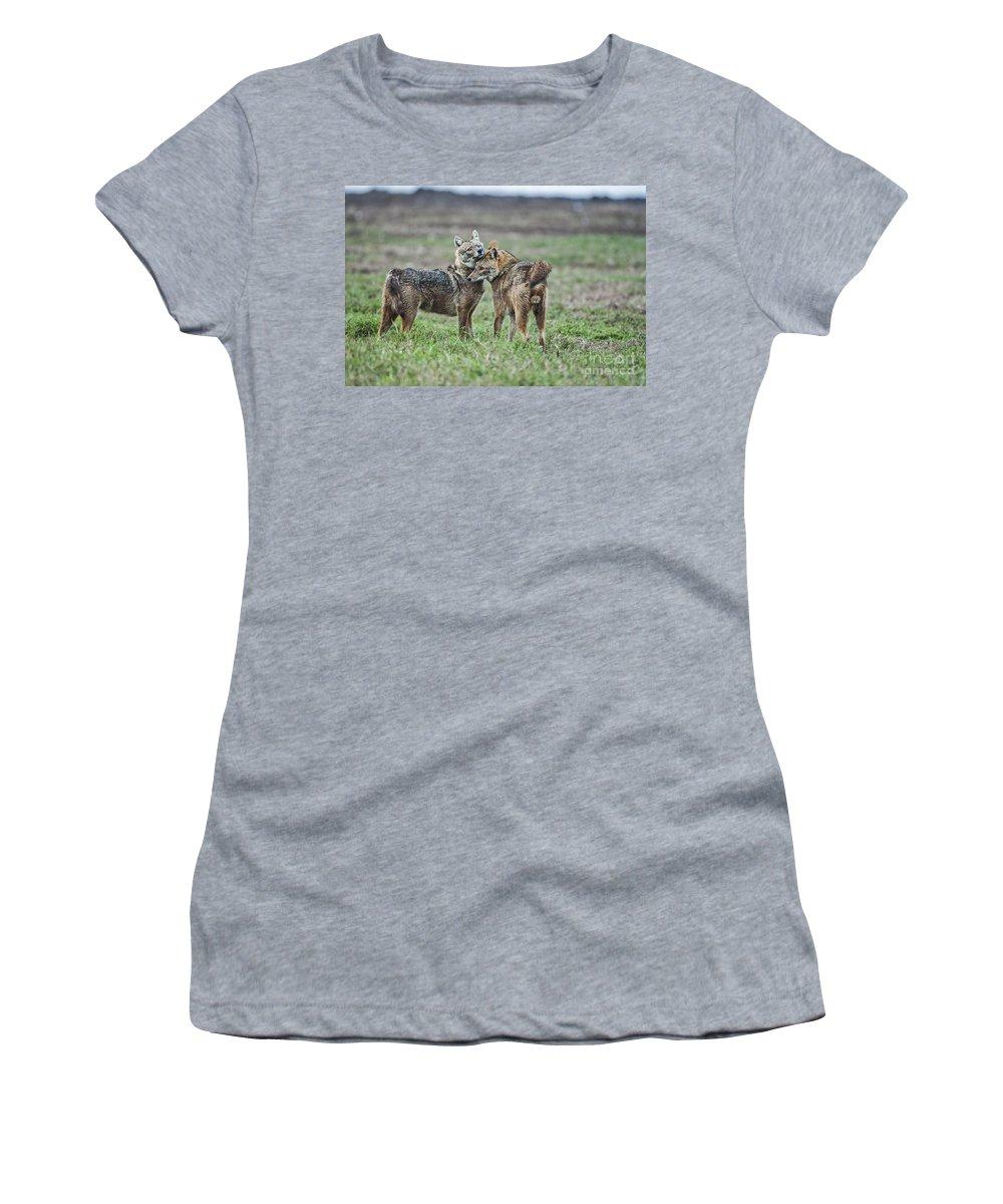Golden Jackal Women's T-Shirt featuring the photograph Golden Jackal Canis Aureus by Eyal Bartov