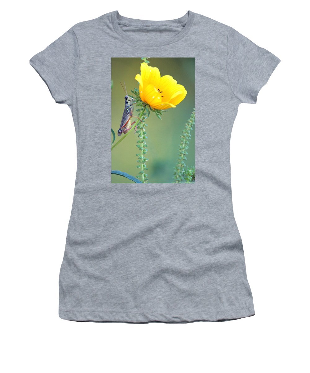 Bugs Women's T-Shirt featuring the photograph Grasshopper Be Still by Crystal Heitzman Renskers