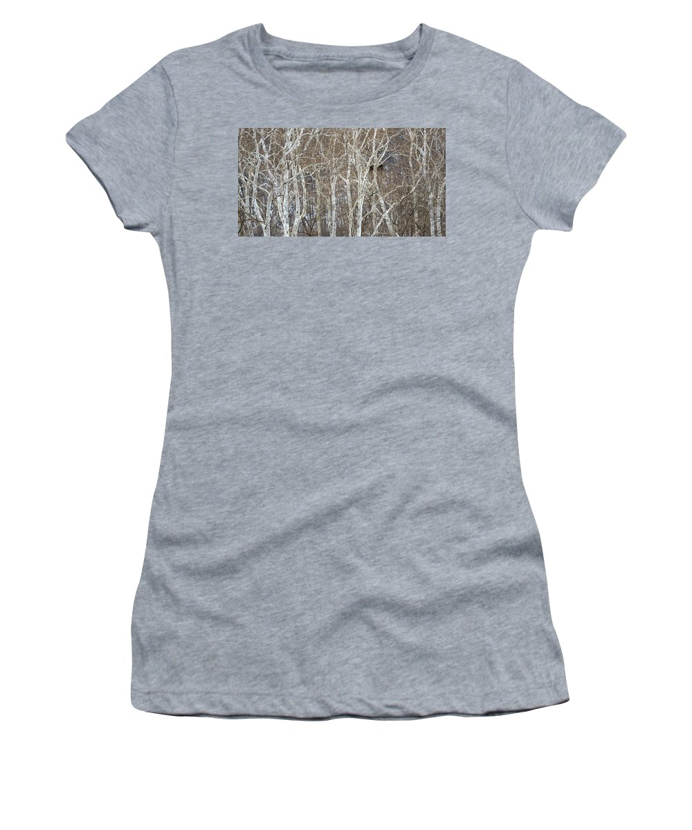 Eagle Women's T-Shirt featuring the photograph In The Sycamores by Ian Ashbaugh