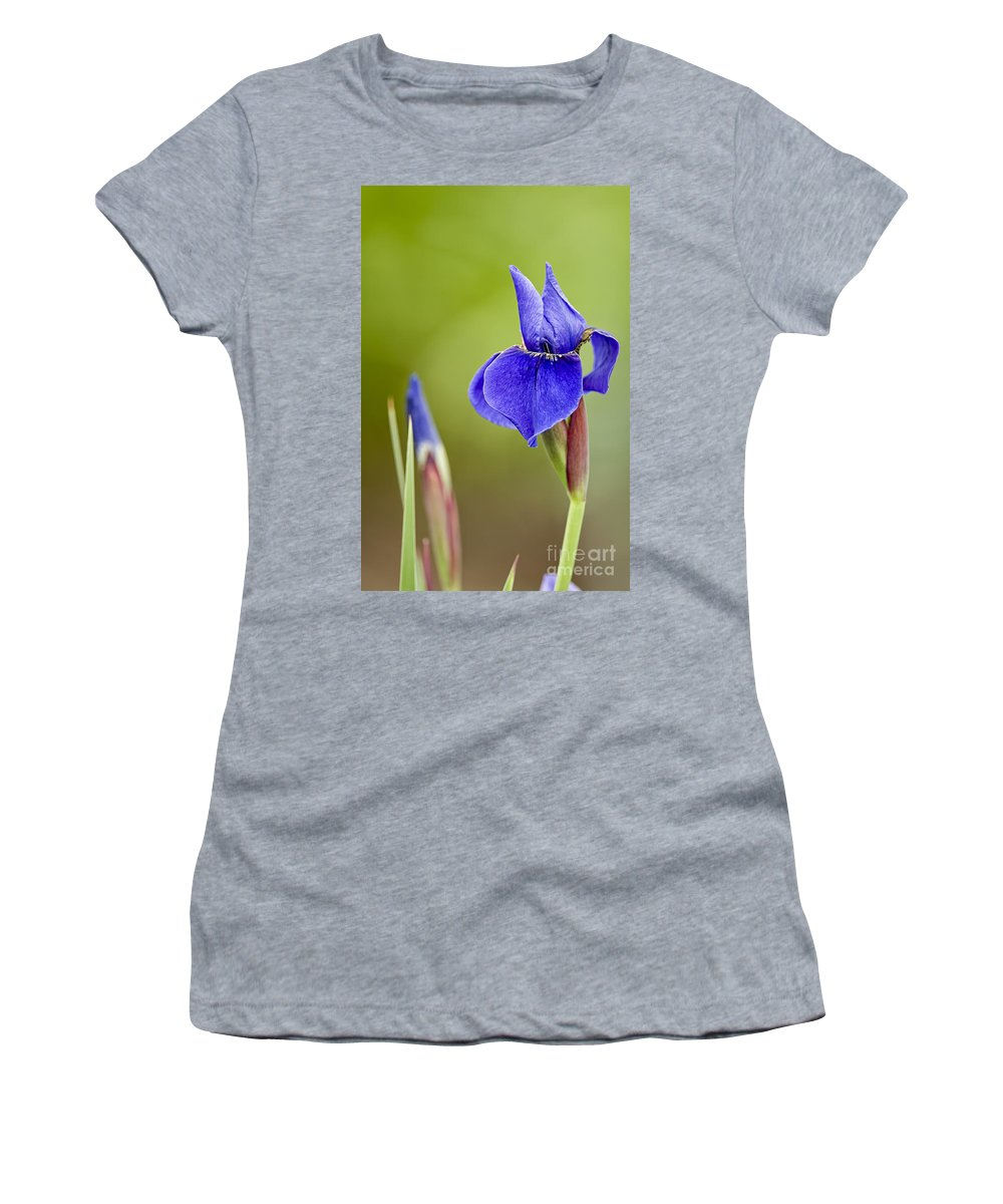 Iris Women's T-Shirt featuring the photograph Iris Pictures 219 by World Wildlife Photography
