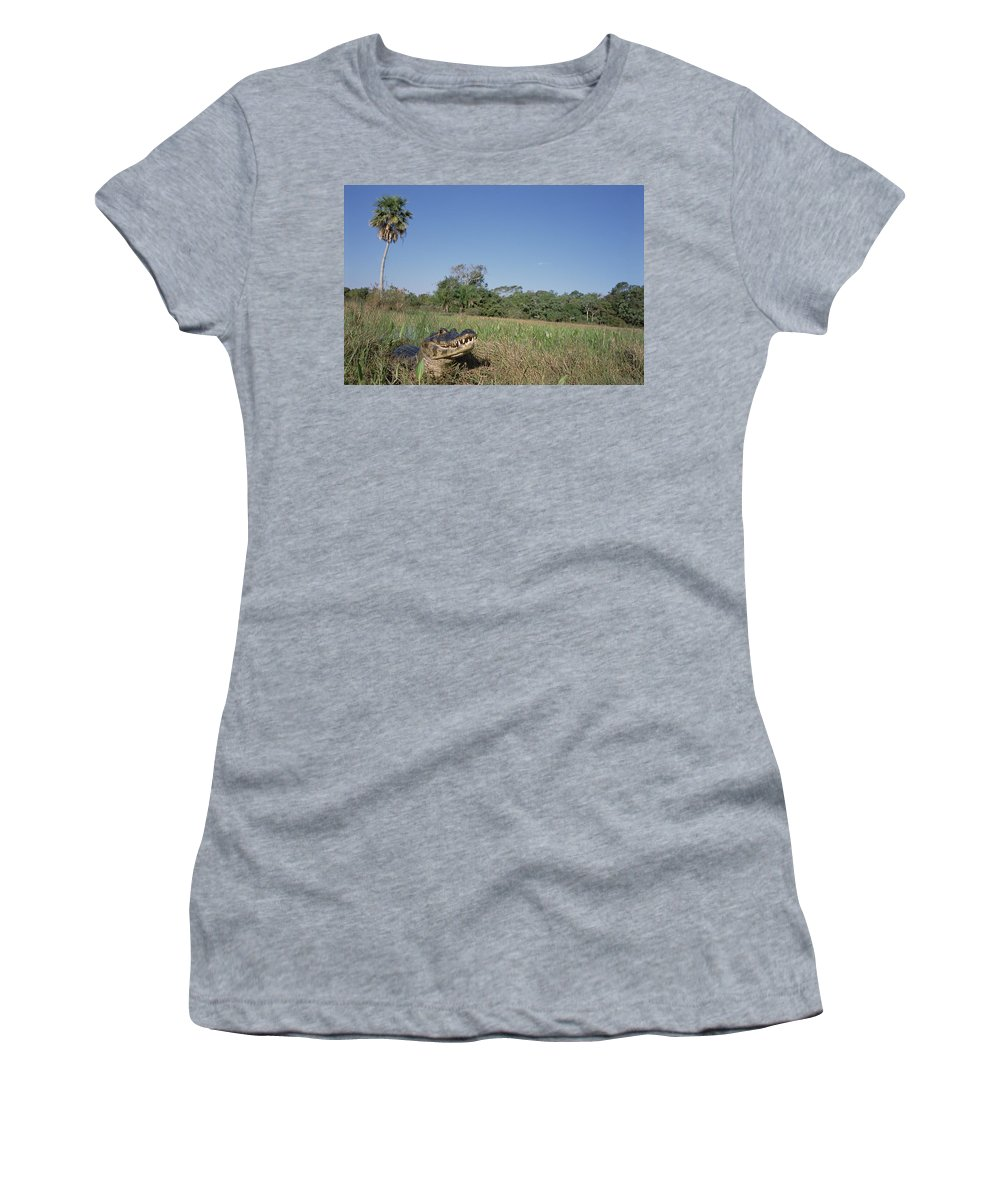Feb0514 Women's T-Shirt (Athletic Fit) featuring the photograph Jacare Caiman In Marshland Pantanal by Tui De Roy