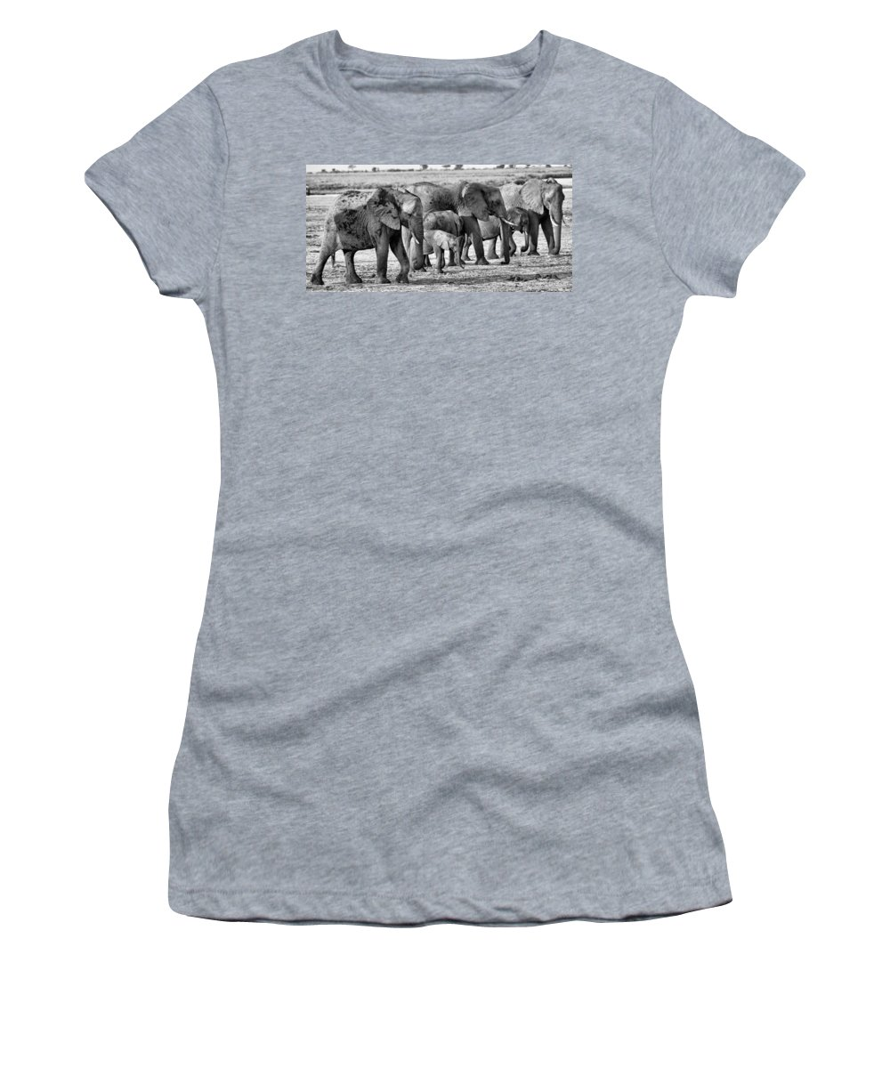 Elephants Women's T-Shirt featuring the photograph Kalahari Elephants In Black And White by Amanda Stadther