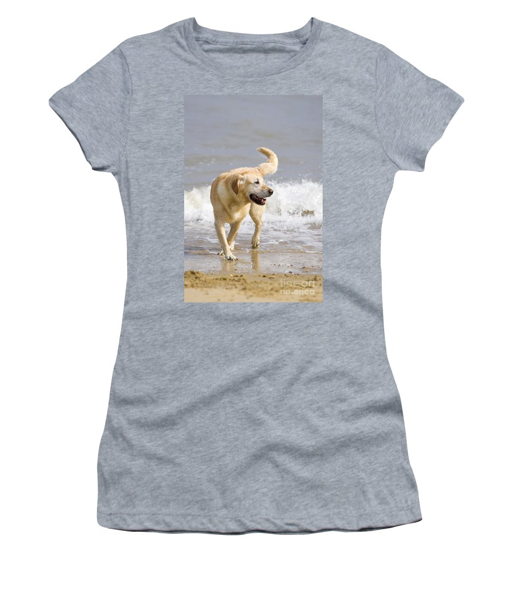 Labrador Women's T-Shirt (Athletic Fit) featuring the photograph Labrador Dog Playing On Beach by Geoff du Feu