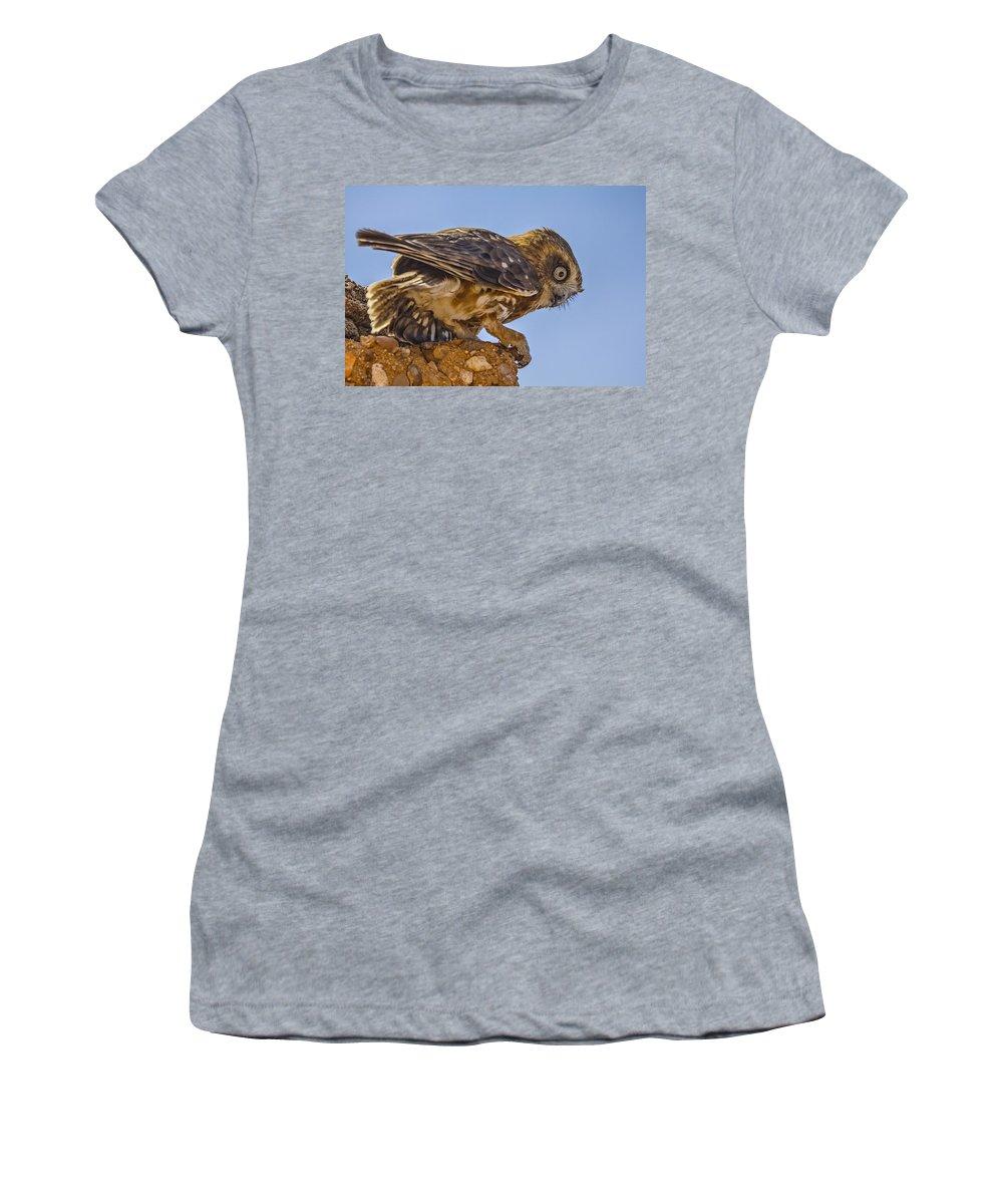Southern Boobook Women's T-Shirt featuring the photograph Little Boobook by Douglas Barnard