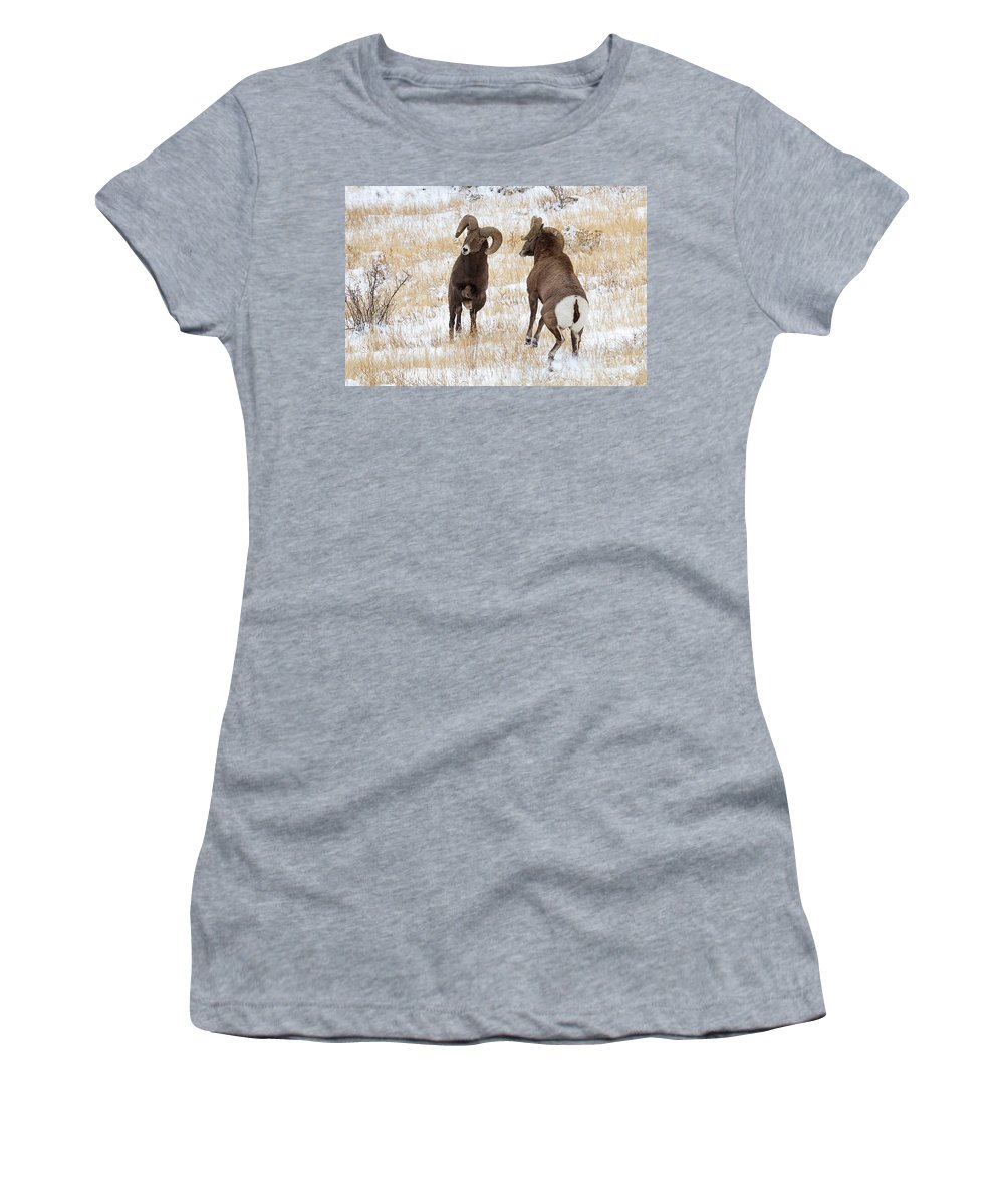 Bighorn Sheep Women's T-Shirt featuring the photograph Locked And Loaded by Jim Garrison