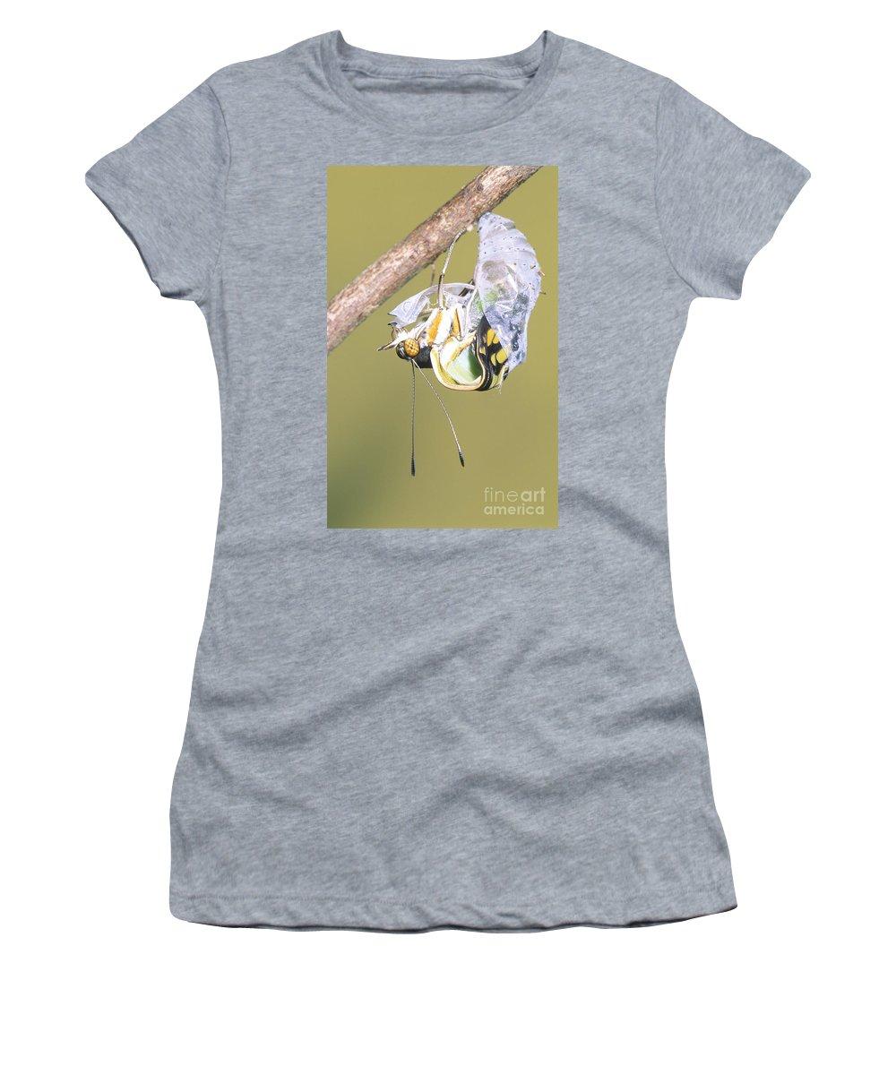 Animal Women's T-Shirt featuring the photograph Malachite Butterfly Emerging 4 Of 6 by Millard H. Sharp