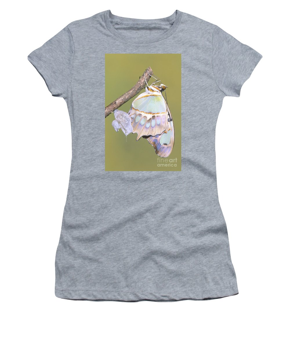 Animal Women's T-Shirt featuring the photograph Malachite Butterfly Emerging 6 Of 6 by Millard H. Sharp