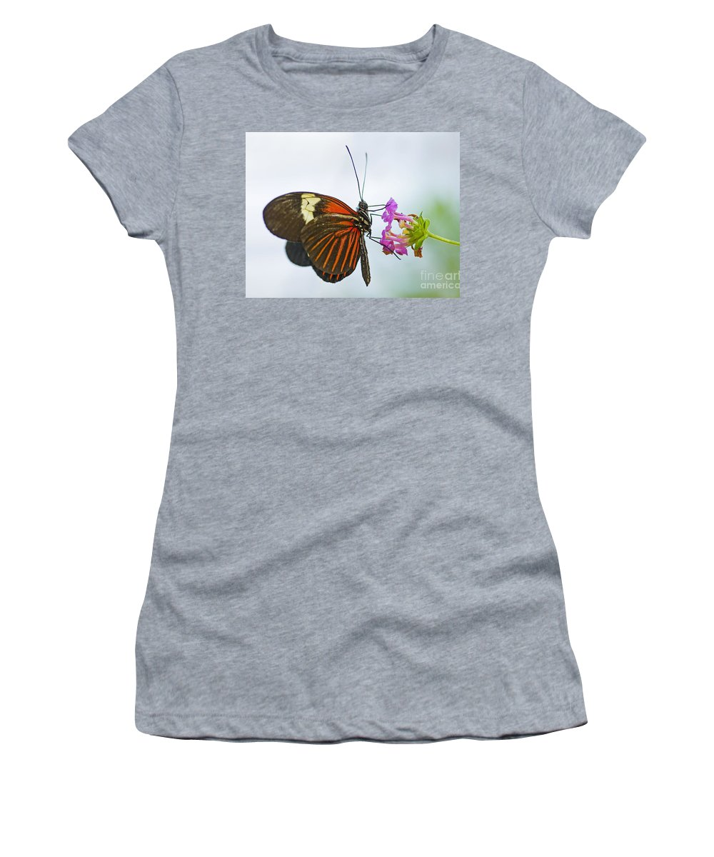 Butterfly Women's T-Shirt (Athletic Fit) featuring the photograph Malay Lacewing by Nick Boren