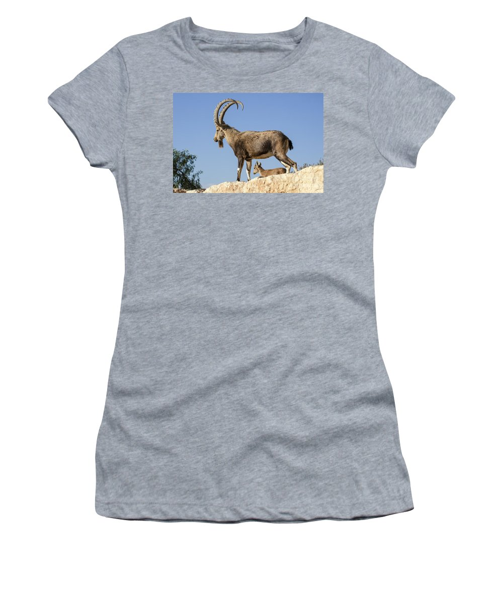 Ibex Women's T-Shirt featuring the photograph Male Nubian Ibex by Eyal Bartov