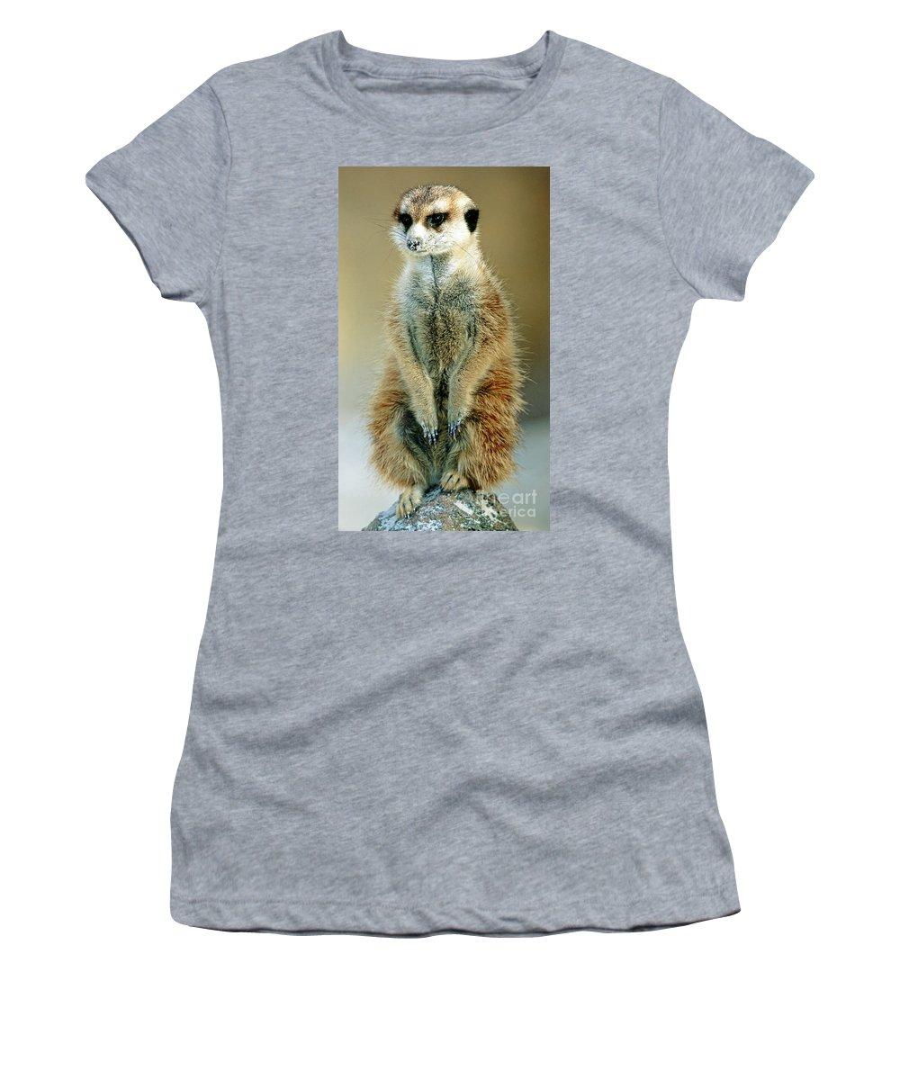Fauna Women's T-Shirt featuring the photograph Meerkat Suricata Suricatta by Millard H. Sharp