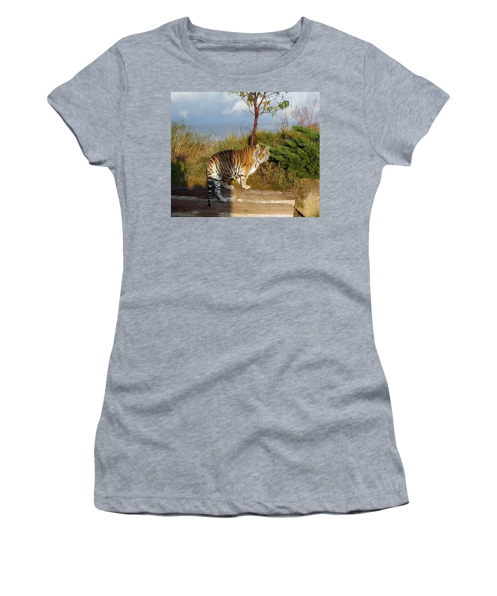 Africa Women's T-Shirt featuring the photograph Out Of Africa Tiger 1 by Phyllis Spoor