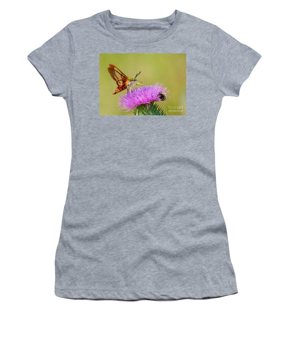 Landscape Women's T-Shirt featuring the photograph Perfect Hummingbird Moth by Cheryl Baxter