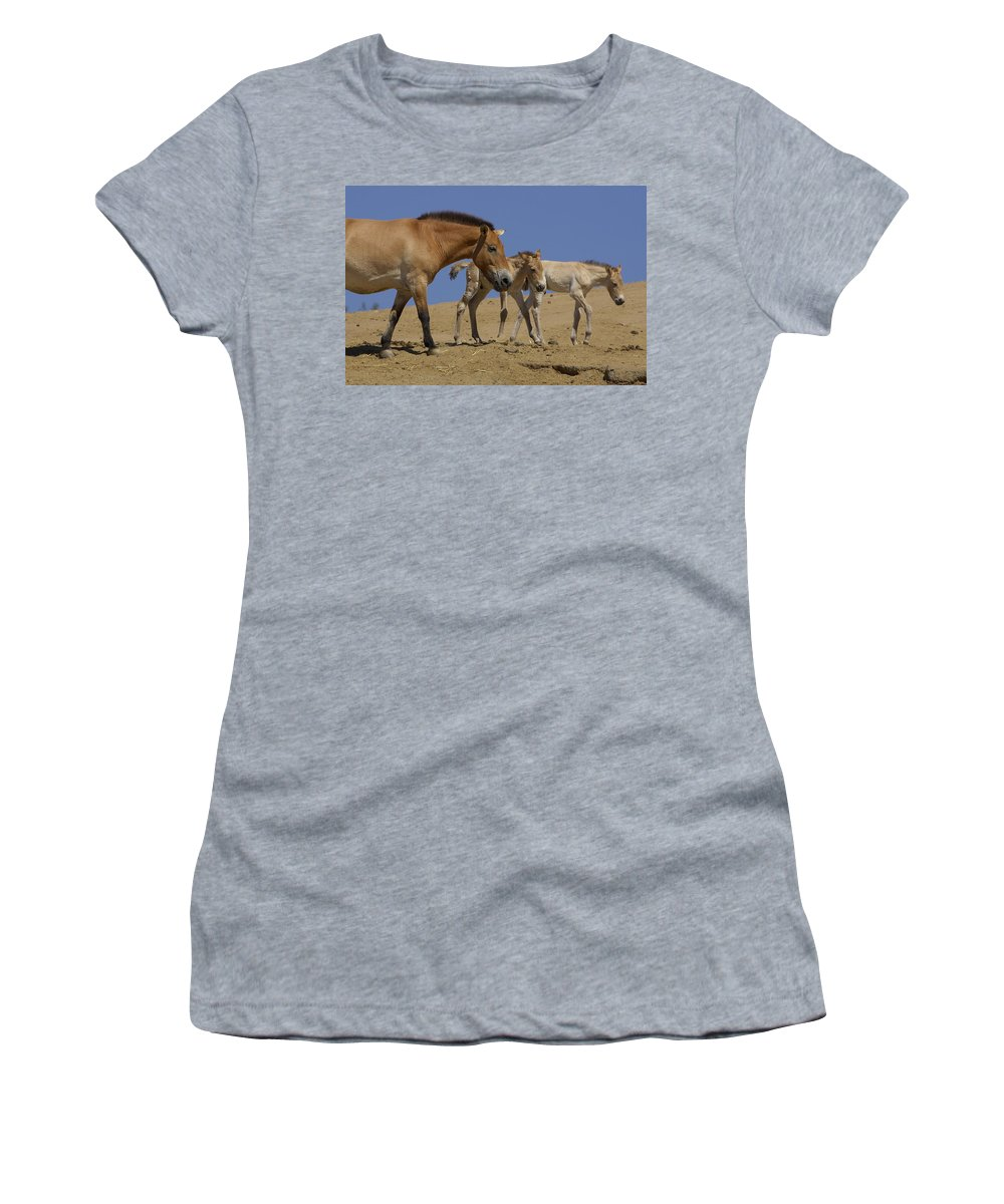 Feb0514 Women's T-Shirt featuring the photograph Przewalskis Horse With Two Foals by San Diego Zoo
