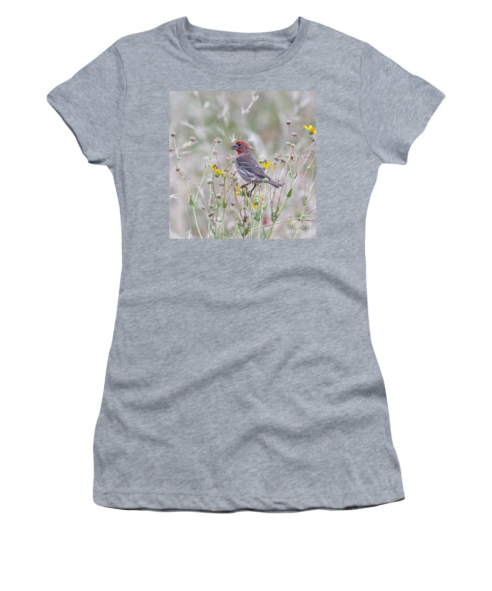 Animal Women's T-Shirt featuring the photograph Red House Finch In Flowers by Robert Frederick